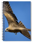 Wedgetail Eagle Flight Spiral Notebook