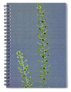 Weed Seeds Spiral Notebook