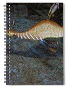 Weedy Sea Dragon Spiral Notebook
