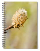 Weeping Willow Seed Spiral Notebook
