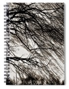 Weeping Willow Tree  Spiral Notebook