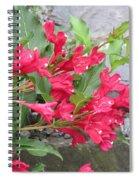 Weigela Florida Red Prince Spiral Notebook