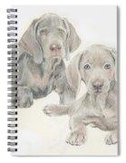 Weimaraner Puppies Spiral Notebook