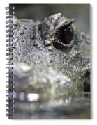 West African Dwarf Crocodile - Captive 03 Spiral Notebook