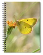 Wester Sulfur Butterfly Spiral Notebook