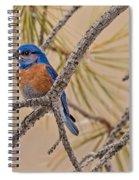 Western Bluebird Male In A Pine Tree.  Spiral Notebook