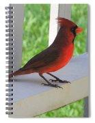 Western Cardinal Spiral Notebook