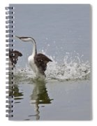 Western Grebe On Lake Spiral Notebook