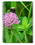 Western Honey Bee On Clover Flower Spiral Notebook