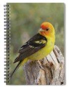 Western Tanager Spiral Notebook