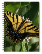 Western Tiger Swallowtail 2 Spiral Notebook