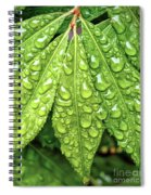 Wet Leaves Spiral Notebook