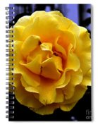Wet Yellow Rose  Spiral Notebook