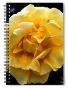 Wet Yellow Rose II Spiral Notebook