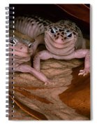 We've Got A Secret - Smiling Leopard Geckos Spiral Notebook