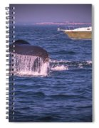 Whale Watching - Humpback Whale 3 Spiral Notebook