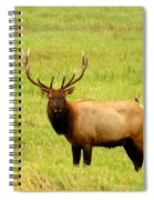 What Are You Looking At Spiral Notebook