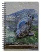 What Are You Looking At? Spiral Notebook