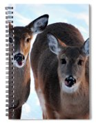 What Do You Say Spiral Notebook
