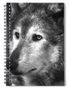What Is A Wolf Thinking Spiral Notebook