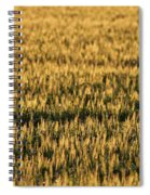 Wheat Beards Spiral Notebook