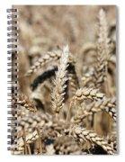 Wheat Close Up Summer Season Spiral Notebook