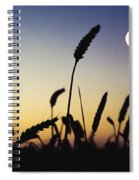 Wheat Field, Ireland Wheat Field And Spiral Notebook