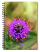Whimsical Nature Spiral Notebook