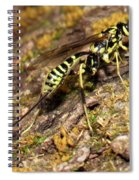 Whip Tailed Wasp Spiral Notebook