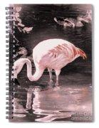 Whisper Pink Flamingo Spiral Notebook