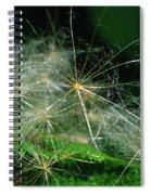 Whispy Seeds Spiral Notebook