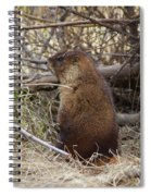 Whistle Pig Spiral Notebook