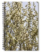 White And Fluffy Blooms. Spiral Notebook