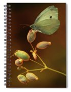 White And Green Butterfly On Dried Flowers Spiral Notebook