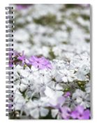 White And Pink Flowers At Botanic Garden In Blue Mountains Spiral Notebook