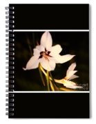 White And Purple Lily Spiral Notebook