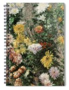 White And Yellow Chrysanthemums In The Garden At Petit Gennevilliers Spiral Notebook