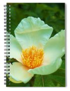 White And Yellow Flower Spiral Notebook