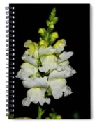 White And Yellow Snapdragon Spiral Notebook