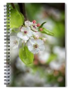 White Apple Flowers Spiral Notebook