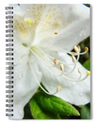 White Azalea Flower 9 Azaleas Raindrops Spring Art Prints Baslee Troutman Spiral Notebook