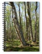 White Birch Forest Spiral Notebook