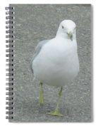 White Bird Of Alberta Spiral Notebook