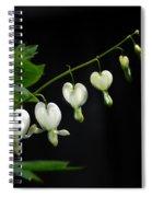 White Bleeding Hearts Spiral Notebook