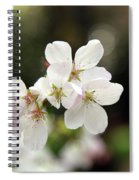 White Blossom  Spiral Notebook
