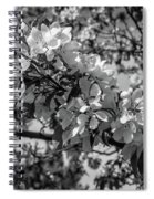 White Blossoms In Black And White Spiral Notebook