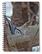 White Breasted Nuthatch - Sitta Carolinensis Spiral Notebook