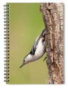 White-breasted Nuthatch Spiral Notebook
