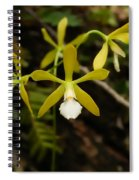 White Butterfly Orchid Spiral Notebook