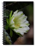 White Cactus Flower  Spiral Notebook